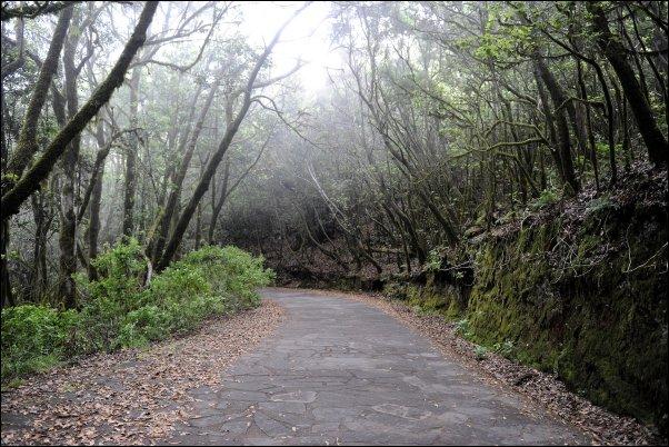 El bosque del Cedro
