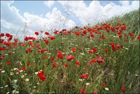 Flores alrededor del Castillo del Cid