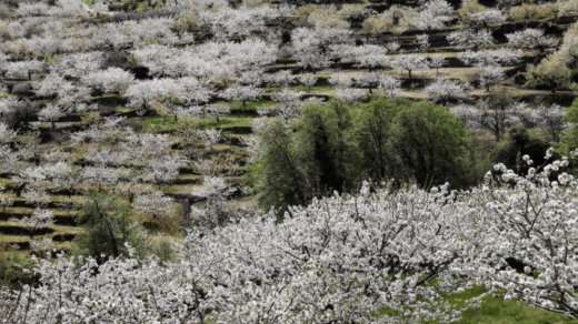 El Valle del Jerte con el cerezo en flor