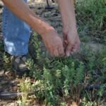 Tenemos a nuestro alcance plantas de todo tipo, formas y utilidad