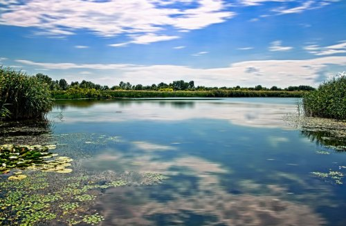 En mitad de la Gran Llanura, como una aparición entre las tierras secas del Alföld, surge el lago Tisza